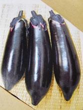 【佐土原茄子】宮崎県の在来種、肉質の軟らかい、長さ20㎝ほどですがアクや種子が少なく生でも美味しいらしいですが、焼きナスにしたときの肉質が最高とのことです。熊本県の赤ナス、新潟県のえんぴつ茄子、ヤキナス、久保ナス、等の地方ナスのルーツと言われています。種子が旅した過程を考えると本当に面白いです。地元の種苗会社で種子の取り扱いあります。
