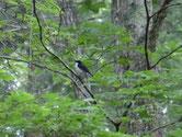 探鳥会 戸隠森林植物園