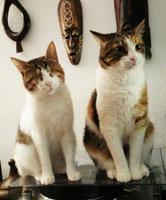 Tina (jetzt Nala) und Püppi (jetzt Zazu)