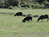 Quelques moutons noirs