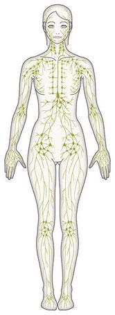 リンパ管の図