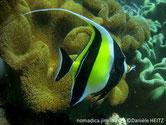poisson, bandes, noires,dorsale, filament, long, tête, masque