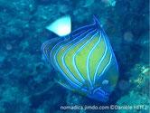 poisson, jaune, bleu, lignes, courbes