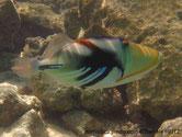 poisson, ovale, coloré