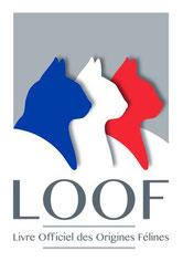 LOOF - Elevage Tribal Bengal