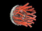 Bürstenkopf