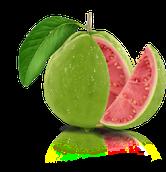 Guaveliquid bestellen, echte guave kaufen, Guave online billig bestellen