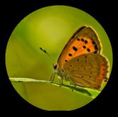 Phénomènes observés - Thématique environnement