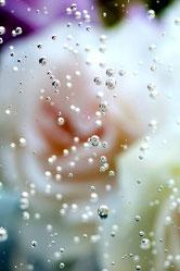 14.気泡《Roses》  [0517_9652]  2010年  ラムダプリント  (ed.1/1)  289 × 193 mm