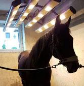 Solarium für beanspruchte Pferdemuskeln auf dem Reiterhof Echenzell