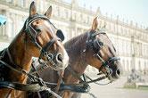 Kutschen und Gespanne auf dem Reiterhof Echenzell - Bild: Pixabay