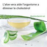 L'Aloe Vera contient aussi une substance qui émulsifie effectivement le cholestérol et rend alors l'organisme capable de l'éliminer.