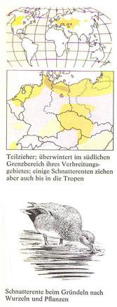 BiHU Vogelführer Schnatterente Natur