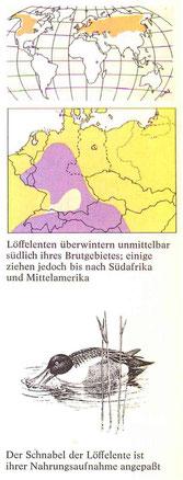 BiHU Vogelführer Löffelente Natur