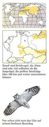 BiHU Vogelführer Tannenmeise Natur