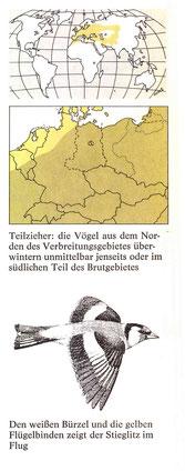 BiHU Vogelführer Stieglitz Natur