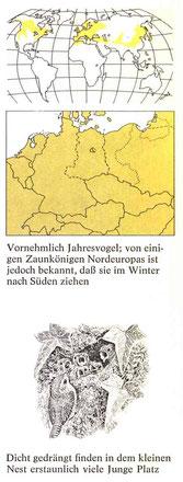 BiHU Vogelführer Zaunkönig Natur