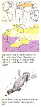 BiHU Vogelführer Reiherente Natur