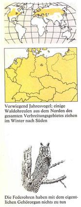 BiHU Vogelführer Waldohreule Natur