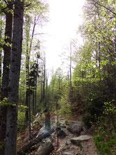 Unterwegs in bayerischen Wald - TravelDog - fair4world