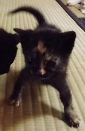 保護猫奮闘記ブログ 猫大好き日本料理店