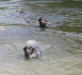 Ayla schwimmend Welpen Wurf in dezember 2010