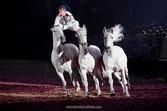 Nacht der Pferde Hannover 6.12.13
