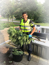 proud policeman seizing cannabis plant