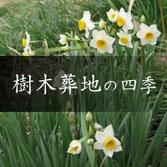 樹木葬の寺 天徳寺 樹木葬地の四季