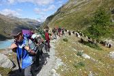 Wanderweg Turtmannhütte