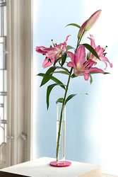 Amaryllis Vase mit Lilie