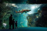 Aquarium de La Rochelle-11,4km