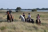 Equitation en club (5,9km à La Jarne) ou en balade dans les marais à Yves-20km