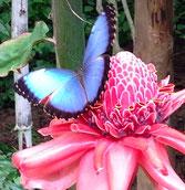Schmetterling als Symbol Veränderung zum Besseren