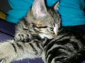 Tierernährungsberatung-Wuff&Meow-Katze
