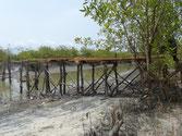 Holzbrücke Baufortschritt