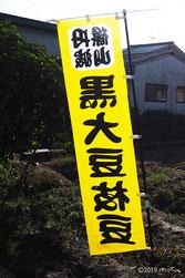 丹波篠山 黒豆狩り