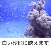 砂地との美しい写真が撮れます。イシモチの大群が、沈船を覆い隠して見えなくなることも。