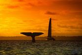 Queue de baleine au port d'arcachon et le voilier à l'arrivée
