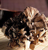 Grifola frondosa Foto: Terramundo