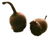 Cerise Griotte - Liqueurs - Corné Dynastie - chocolat