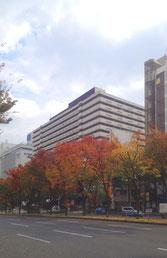 色づく街路樹/上本町6丁目駅