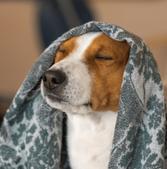 Hund mit Decke über den Kopf, Meditation