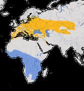 Karte zur Verbreitung des Drosselrohrsänger (Acrocephalus arundinaceus)