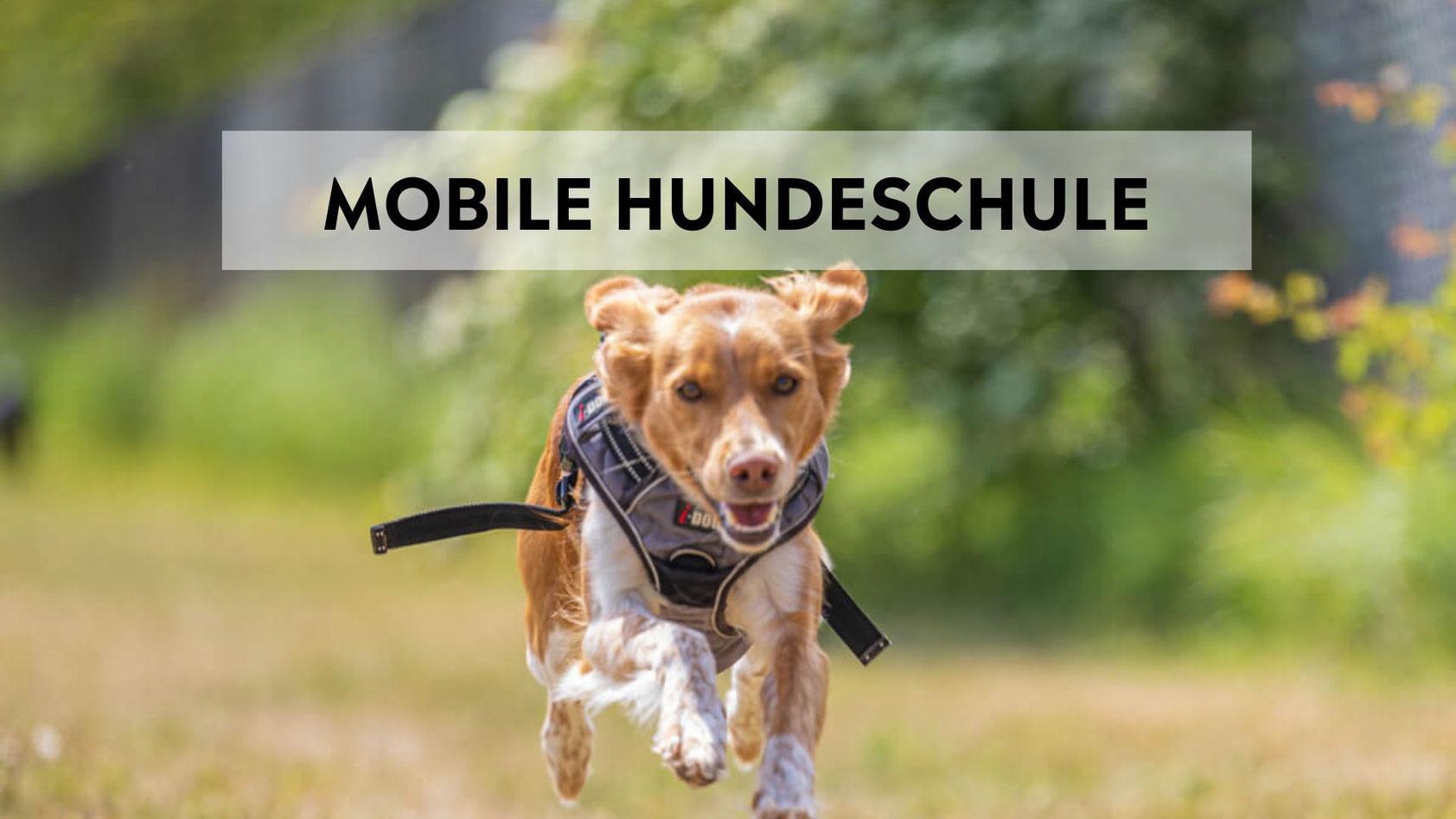 mobile Hundeschule, hundetraining