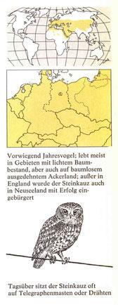 BiHU Vogelführer Steinkauz Natur