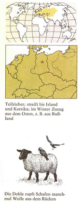 BiHU Vogelführer Dohle Natur