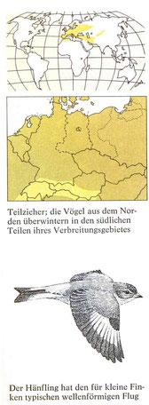 BiHU Vogelführer Hänfling Natur