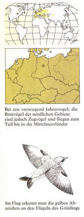 BiHU Vogelführer Grünling Natur