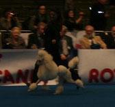 BOB Gent 2012